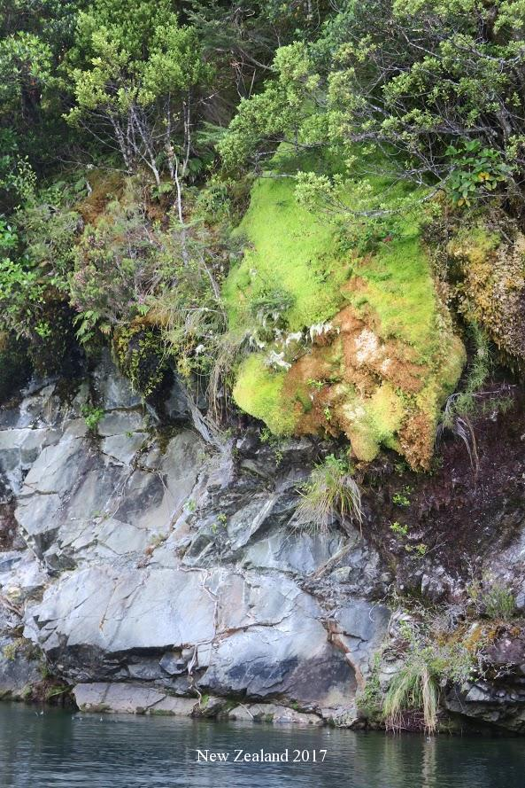 Waiau River - Water Stryder Dave Inks Kiwi Jim
